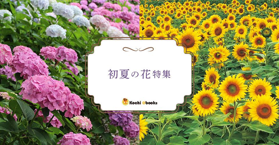 2019初夏の花特集